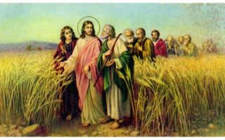 CÁC BÀI SUY NIỆM LỜI CHÚA  CHÚA NHẬT XIV THƯỜNG NIÊN NĂM C