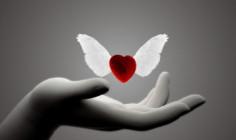 Một trái tim mới