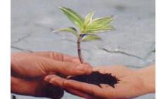 Mảnh Đất Lòng Con
