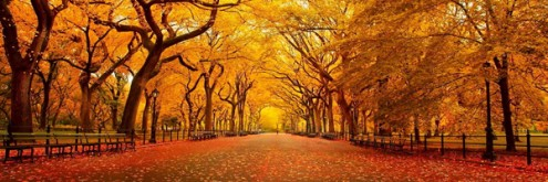 AUtumn-Yellow-Park