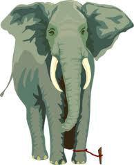 elephant-rope-1