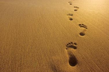 footprint (1)