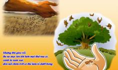 CÁC BÀI SUY NIỆM LỜI CHÚA  CHÚA NHẬT XI THƯỜNG NIÊN – NĂM B