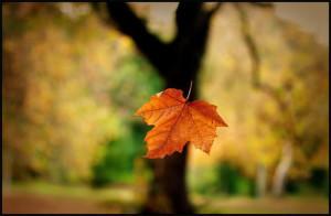 Tháng 11 – gẫm suy về cái chết
