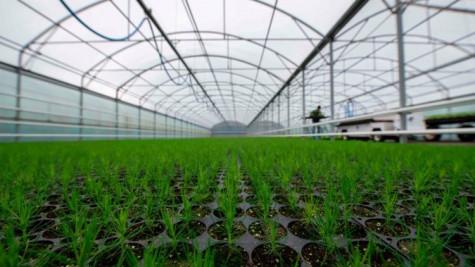 Mục vụ giới trẻ Paraguay sáng kiến trồng 700 ngàn cây xanh