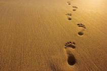 Người trẻ và việc phân định: ơn gọi độc thân thánh hiến hay ơn gọi hôn nhân