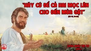 CÁC BÀI SUY NIỆM LỜI CHÚA CHÚA NHẬT XVI THƯỜNG NIÊN- A