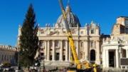 Cây thông Giáng sinh đã được dựng lên tại quảng trường thánh Phê-rô