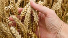 Tòa Thánh tổ chức hội thảo về an ninh lương thực